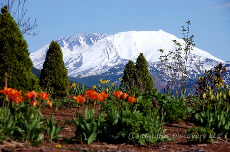 Mt-St-Helens.com  (C) Natures Discovery LLC